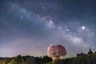 長野県 野平の桜と天の川(野平の一本桜)