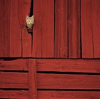 壁の隙間から頭を出す猫