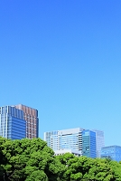 東京都 新緑と丸の内のビル