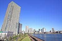 東京都 晴海大橋から見た豊洲ビル街