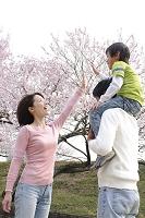 桜と男の子を肩車する父と母の家族