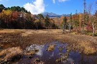 長野県 どじょう池