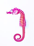タツノオトシゴ 透明骨格標本