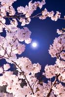 富山県 満月と夜桜