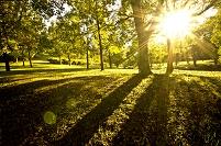 公園 木の影