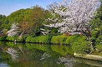 京都府  神泉苑