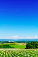 北海道 パレットの丘の夏景色