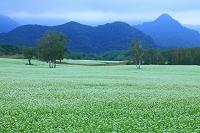 福島県 会津高原 そば畑