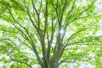 新緑の木に木漏れ日