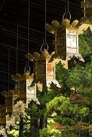 高野山 壇上伽藍 御影堂の吊灯篭