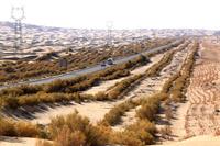 中国 タクラマカン砂漠の緑化