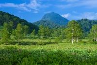長野県 志賀高原田の原湿原