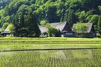 富山県 五箇山 新緑の菅沼合掌造り集落と水田