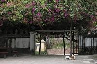 ラオス ルアンパバーン ブーゲンビレアの咲く寺院の門
