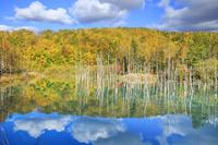 北海道 紅葉した青い池
