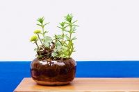 盆栽 草の寄せ植え