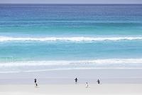 フォークランド諸島 ボランティアポイント キングペンギン