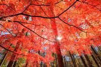 山梨県 紅葉と太陽光