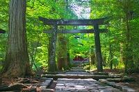 栃木県 滝尾神社 運試しの鳥居