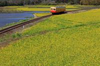 千葉県 菜の花と小湊鉄道