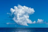 東京都 小笠原 夏の海の入道雲