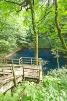 青森県 十二湖の一つに数える青池