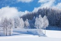 北海道 和寒の森