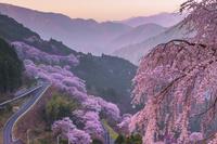 高知県 春の桜の集落