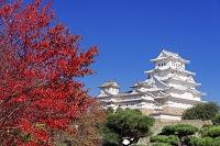 兵庫県 紅葉と姫路城
