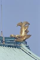 名古屋城金鯱(雄)