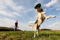 フリスビーをキャッチする犬