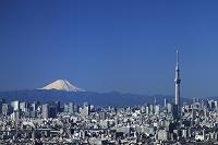 千葉県 アイ・リンクタウン展望施設よりスカイツリーと富士山