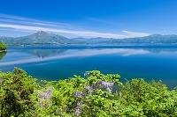 福島県 藤の花咲く猪苗代湖