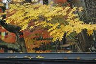 晩秋の角館・紅葉