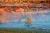 アメリカ合衆国 霧深い秋の森