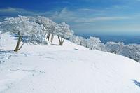 三重県 竜ガ岳の樹氷