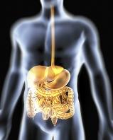 人体CG 消化器系