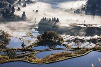 新潟県 雲海の星峠の棚田朝景