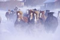 北海道 十勝牧場の馬追い運動