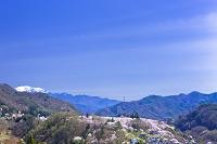長野県 高遠城址公園 高遠小彼岸桜と南アルプス