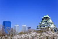 大阪府 サクラ咲く大阪城天守閣と大阪ビジネスパーク