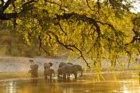 ナミビア 水を飲むゾウの群れ