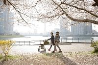 桜の木の下をお花見しながら歩く日本人家族