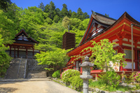 奈良県 新緑の談山神社