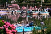 千葉県 船橋漁港 船溜まり 海苔網とアジサイ
