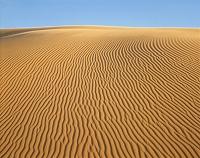 サハラ砂漠 風紋 サハラ アルジェリア