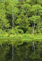 新緑の牛留池