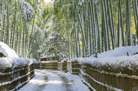 雪の竹林 向日市 京都府