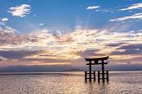 滋賀県 朝焼けの白髭神社の鳥居