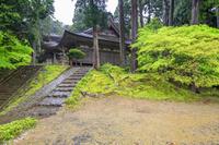 福井県 小雨に煙る新緑の明通寺 本堂と三重塔